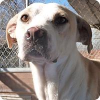 Adopt A Pet :: Pringles - Boaz, AL