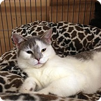Adopt A Pet :: Latte - Hamilton, ON