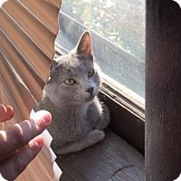 Adopt A Pet :: Kismet - St. Louis, MO