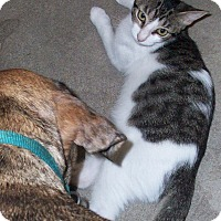 Adopt A Pet :: Happy - Morriston, FL
