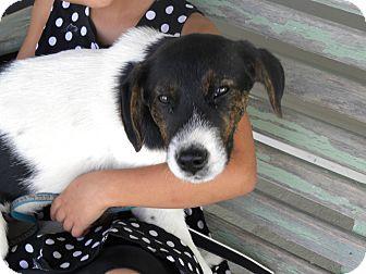 Hound (Unknown Type) Mix Dog for adoption in Germantown, Ohio - Wendall
