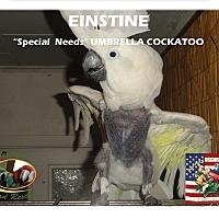 "Adopt A Pet :: ""Einstein"" Special needs - Vancouver, WA"