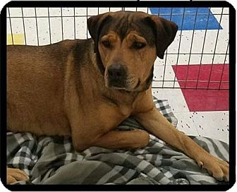 Shepherd (Unknown Type)/Rottweiler Mix Dog for adoption in Las Vegas, Nevada - Bonnie