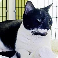 Adopt A Pet :: Eric - Denver, CO