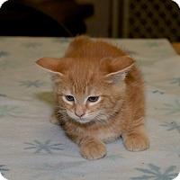 Adopt A Pet :: Yoshi - Medina, OH