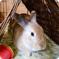 Adopt A Pet :: Mr. Butterfingers - Foster, RI