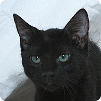 Adopt A Pet :: Aiden V - Sacramento, CA