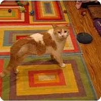Adopt A Pet :: Chumley--PETSMART - Muncie, IN