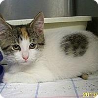 Adopt A Pet :: Mazzy - Dover, OH