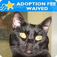 Adopt A Pet :: Sweetie - Miami, FL