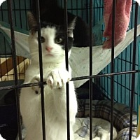 Adopt A Pet :: Patch - Byron Center, MI