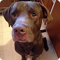 Adopt A Pet :: Bruce - Lewisville, IN
