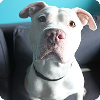 Adopt A Pet :: Mikey - Chicago, IL