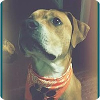 Adopt A Pet :: Brody - Courtesy Post - Toledo, OH