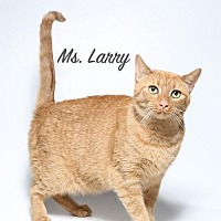 Adopt A Pet :: Ms Larry - Laconia, IN