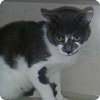 Adopt A Pet :: Lucas - Hamburg, NY