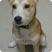 Adopt A Pet :: Princess - Gary, IN