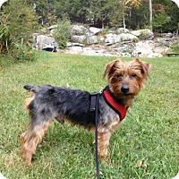 Adopt A Pet :: Mr. Magoo - Ardsley, NY