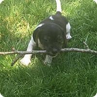 Adopt A Pet :: Ringo - Marlton, NJ