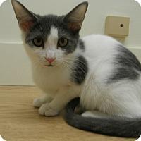 Adopt A Pet :: Reenie - Milwaukee, WI