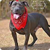 Adopt A Pet :: Norman - Fort Valley, GA