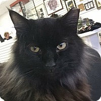 Adopt A Pet :: Yohance - Covington, KY