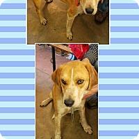 Adopt A Pet :: Buddy 2 - Manchester, CT