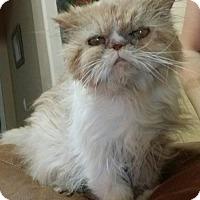 Adopt A Pet :: Zoey Schuffenbottom - Glendale, AZ