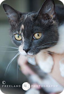 Domestic Shorthair Cat for adoption in Jackson, Michigan - Lillian