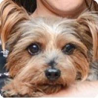 Adopt A Pet :: Stephan - New York, NY