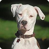 Adopt A Pet :: Skyler - Altadena, CA