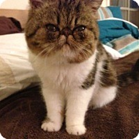 Adopt A Pet :: Sommer - Beverly Hills, CA