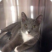 Adopt A Pet :: Odie - Pittstown, NJ