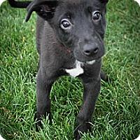 Adopt A Pet :: Moffat - Broomfield, CO