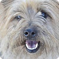 Adopt A Pet :: Jagger - Meridian, ID