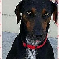 Adopt A Pet :: Pearl - Winchester, CA