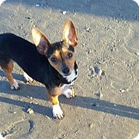Adopt A Pet :: Mikey - San Diego, CA