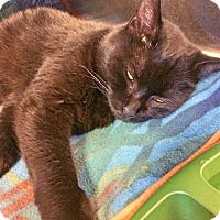 Adopt A Pet :: Bella - Lancaster, PA
