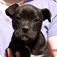 Adopt A Pet :: Halo (8 lb) Video! - Sussex, NJ
