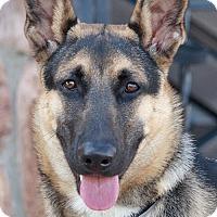 Adopt A Pet :: Coco von Chemnitz - Los Angeles, CA