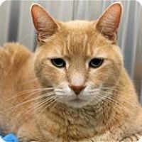 Adopt A Pet :: Tanny - Lincoln, CA