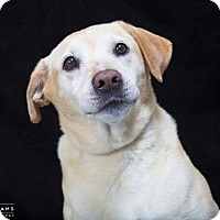 Adopt A Pet :: CECILIA - Nashville, TN