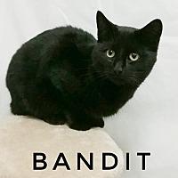 Adopt A Pet :: Bandit - Kendallville, IN