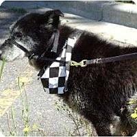 Adopt A Pet :: Philanthropist needed - Mercer - Golden, CO