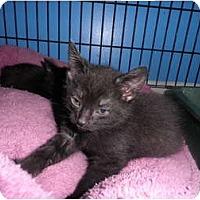Adopt A Pet :: Cedric - Warren, MI