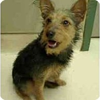 Adopt A Pet :: Courage - FOSTER NEEDED - Seattle, WA