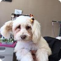 Adopt A Pet :: Bethel - Las Vegas, NV