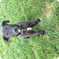 Adopt A Pet :: Chip - Homewood, AL