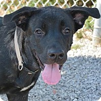 Adopt A Pet :: Starla - Athens, GA
