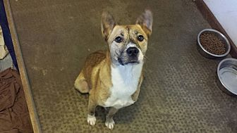 German Shepherd Dog/Whippet Mix Dog for adoption in Virginia Beach, Virginia - Fern